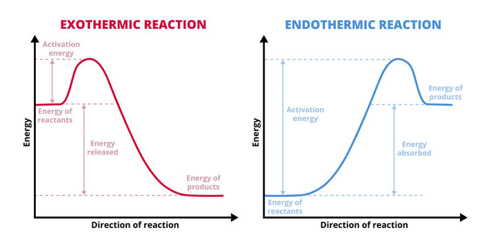Vector graphs or charts of endothermic and exothermic reactions isolated on white. Exo and endo chemical reactions. Activation energy. Reactants, products, increase and decrease in enthalpy H.