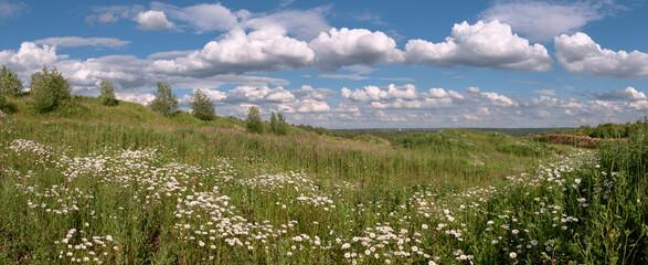 Summer field under a cloudy sky.