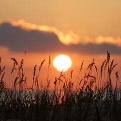 Prachtige zonsondergang aan zee: kust droog gras stam over kleurrijke zonsondergang hemel. Zomeravond op zee of meer kust natuurlijke landschapsmening. Natuurschoonheid, zomerreizen en recreatieconcept