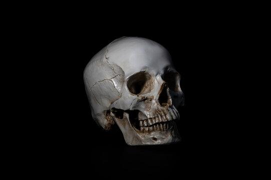 izolowana czaszka na czarnym tle