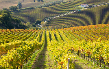 Vineyard on hils in countryside, agricultural landscape