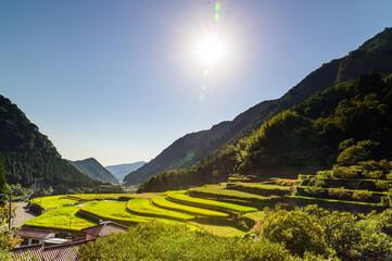 初秋の棚田景色「秋晴れの日差しと棚田」 Terraced rice fields in early autumn