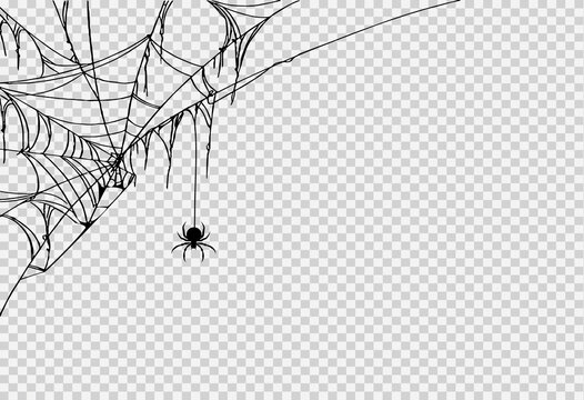 Halloween party background with spider hanging from spiderwebs isolated png or transparent texture,blank space for text,element template for poster,brochures, online advertising,vector illustration
