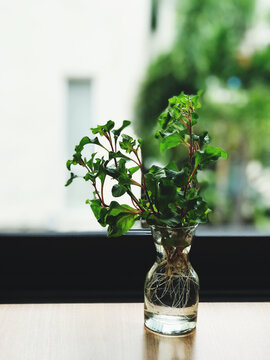 Plants in small vases to decorate your home or shop give you a feeling of freshness in the morning.