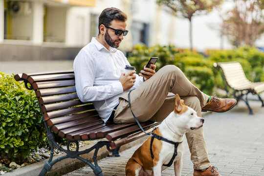 A middle-aged bearded businessman is sitting on a bench with his Stafford, drinking coffee to go and hanging on the social media on the phone.