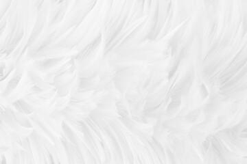 Obraz Beautiful white grey bird feathers pattern texture background. - fototapety do salonu