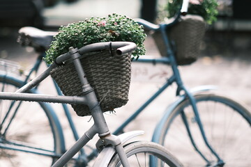 vintage basket with flowers on an old bicycle. parked bicycles. selective focus