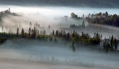 Obraz Jesień, mglisty krajobraz - fototapety do salonu