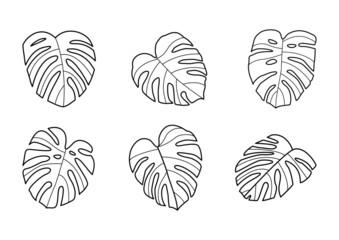 Fototapeta Monstera - egzotyczne liście. Kolekcja ilustracji. Liście tropikalnej rośliny do wykorzystania w projektach. obraz