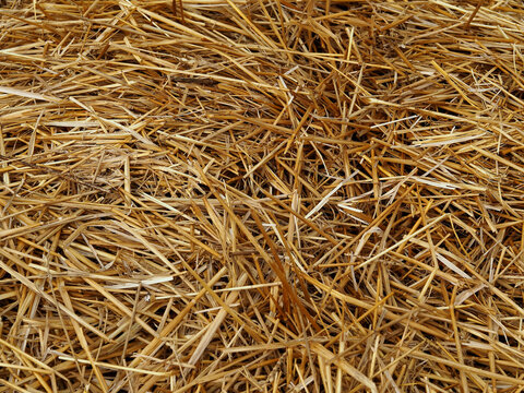 Quality golden straw as background