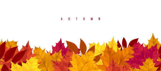 Obraz Horizontal seamless pattern with autumn leaves, leaf fall. Banner with maple and rowan. Design element for seasonal holidays, events, discounts, and sales. Isolated objects on white background. - fototapety do salonu