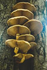 Fototapeta grzyby rosnące na pniu obraz