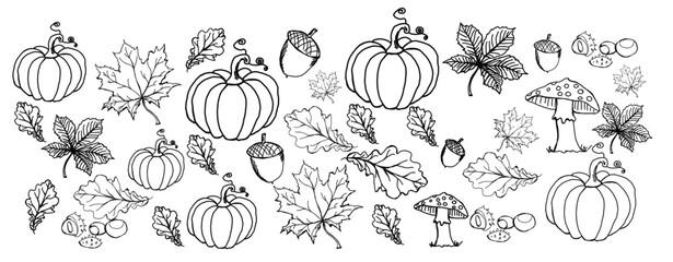 Obraz Liście, jesień, ilustracja, projekt, rysunek , szkic  - fototapety do salonu