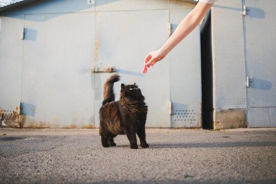 Anonymous woman feeding homeless cat on street