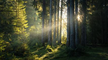 Fototapeta Spectacular sun rays in fairy tale forest. Autumn foggy morning obraz