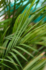 close-up of a plant, tropical background, green corner