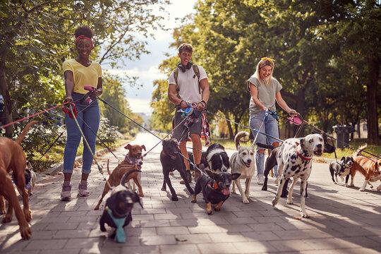 Dog walking on leash with three professional dog walker