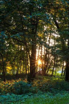 wschód słońca w parku jesiennym