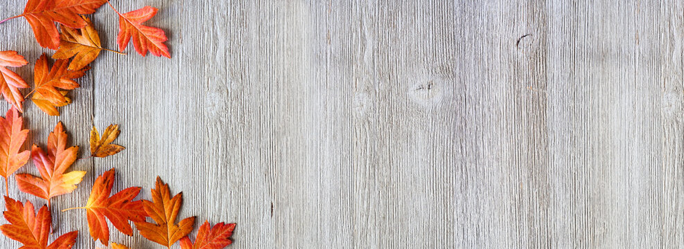 Fall leaves corner border over a rustic grey wood banner background. Top down view with copy space.