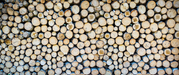 Stack of tree trunks. Texture background