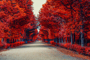 colorful autumn alley