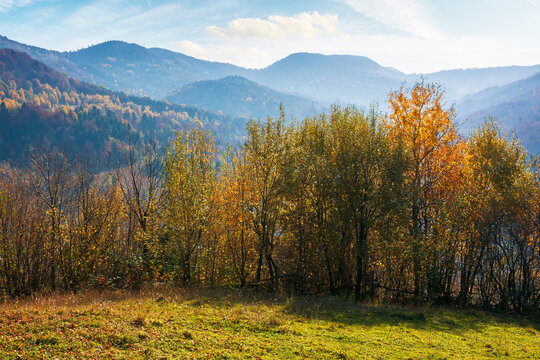 countryside landscape in autumn. forest on the mountain hills in colorful foliage. beautiful nature background on a sunny forenoon