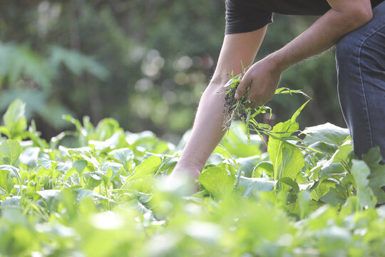 Male legs and hands Weed Out plant gardening in home garden