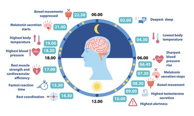 Fototapeta Circadiam rhythm infographic. Information about human body. Information for scheduling, healthy lifestyle, daily routine, sport time. Cartoon flat vector illustration isolated on white background obraz