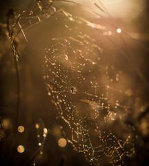 Obraz sieć, pająk, charakter, rosa, woda, kropla, makro, insekt, pajęczyna, pajęczyna, net, deseń, poranek, kropla, sieci, deszcz, tekstura, pułapka, jesienią, projekt, pajęczyna, bliska, pająk, jedwab, lat - fototapety do salonu