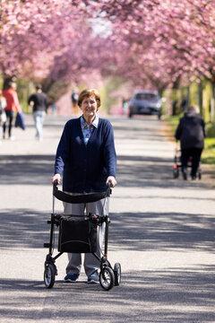 Seniorin, 86 Jahre alt, geht mit Rollator im Park spazieren, im Frühling zur Zeit der Kirschblüte