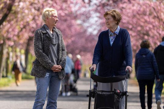 Seniorin mit Rollator geht mit ihrer Tochter im Park spazieren, im Frühling zur Kirschblüte,