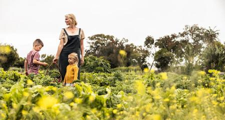 Fototapeta Woman harvesting fresh vegetables with her children obraz