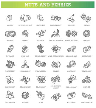 web icons collection - nuts and berries. Vector symbols