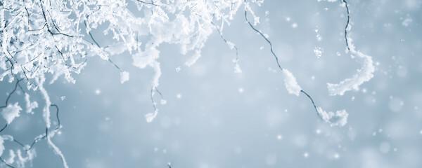 Fototapeta verschneite zweige vor abstraktem hintergrund obraz