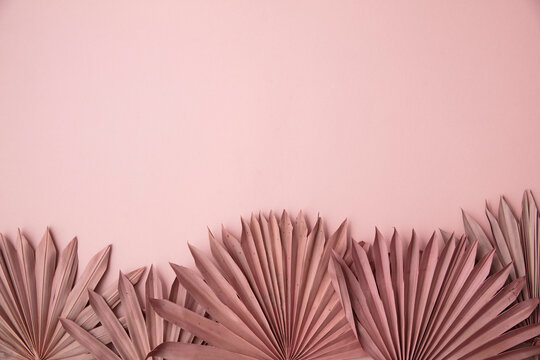 Dried pink tropical palm tree leaf boho style fashionable decoration on a pastel pink background