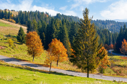 autumnal landscape in mountains. coniferous forest on the hill and trees in colorful foliage by the road. beautiful nature outdoor scenery on a sunny day