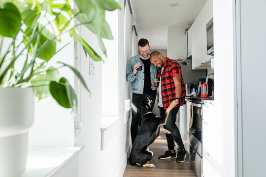 Couple petting their dog, happy marriage HD photo