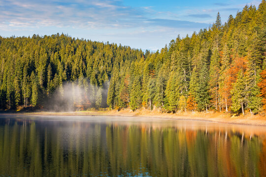landscape at the mountain lake in autumn. beautiful nature scenery in the morning. spruce forest on the shore. synevyr national park, ukraine