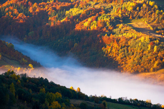 mist in the valley. beautiful autumn morning scenery in mountains. trees in colorful foliage on the hill