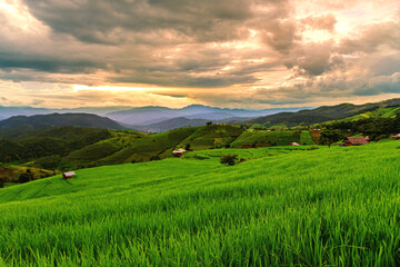 Scenery of the terraced rice fields at Ban Pa Pong Piang in Chiang Mai, Thailand.