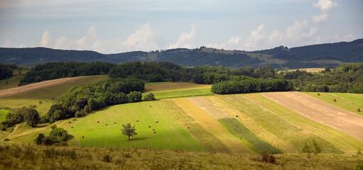 Fototapeta Pole ziemia uprawna latem w otoczeniu lasów obraz