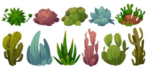 Fototapeta Set of cactus, desert cacti flowers opuntia, monilaria, cotyledon, echeveria colorata, echeveria agave,saguaro Cartoon succulents with green prickly or fleshy leaves, cactaceae Vector illustration obraz
