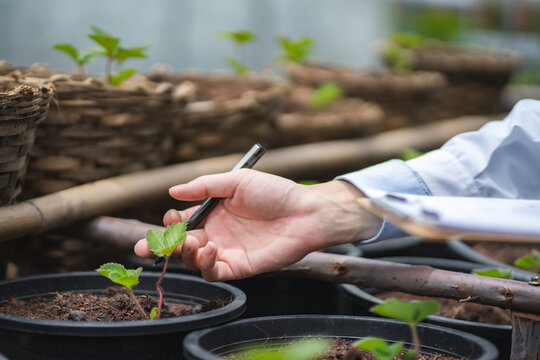 agriculture scientist working to research a green vegetable plant in a field of biology laboratory, biotechnology is a technology, botany experiment of nature ecology organic greenhouse farming growth