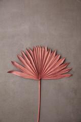 Fototapeta Dried pink tropical palm tree leaf boho style fashionable decoration on a concrete background obraz