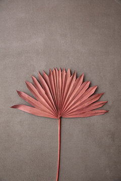Dried pink tropical palm tree leaf boho style fashionable decoration on a concrete background