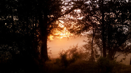 Fototapeta Sunset or sunrise framed by wild trees in the country obraz