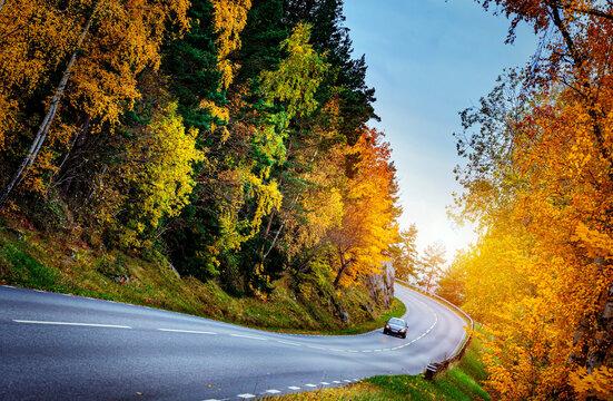 Asphalt road with autumn foliage