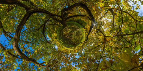 Obraz hyperbolic little planet projection of spherical panorama under yellow oak at sunny autumn day in park with blue sky and clouds. - fototapety do salonu