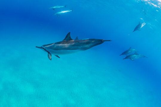 Dolphin swimming near pond over sandy ocean bottom