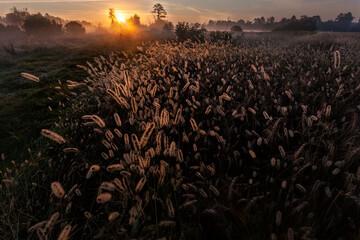 Fototapeta Sunrise over the meadows, Golkow, Piaseczno, Mazowsze, Poland obraz